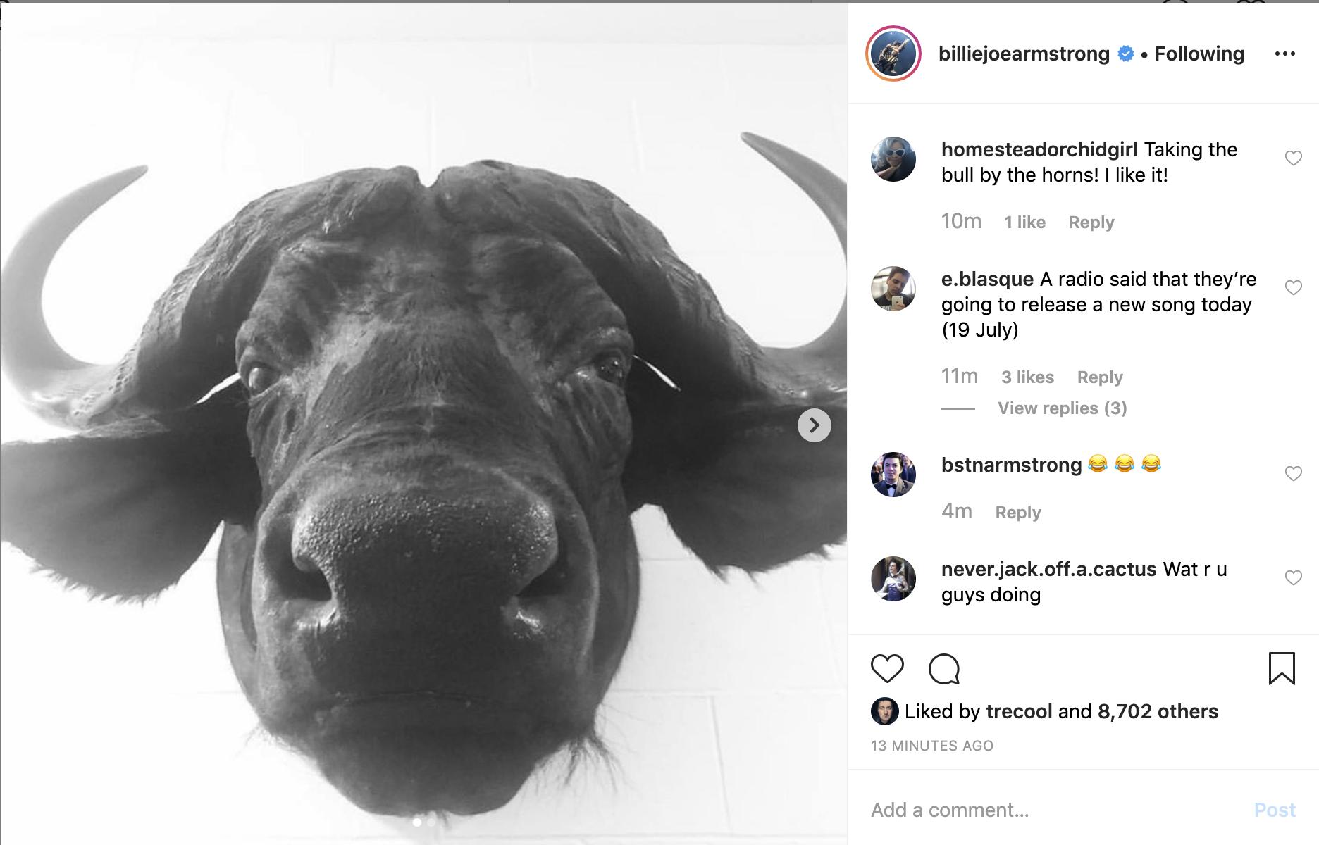 Imagen de un toro en el instagram de Billie Joe