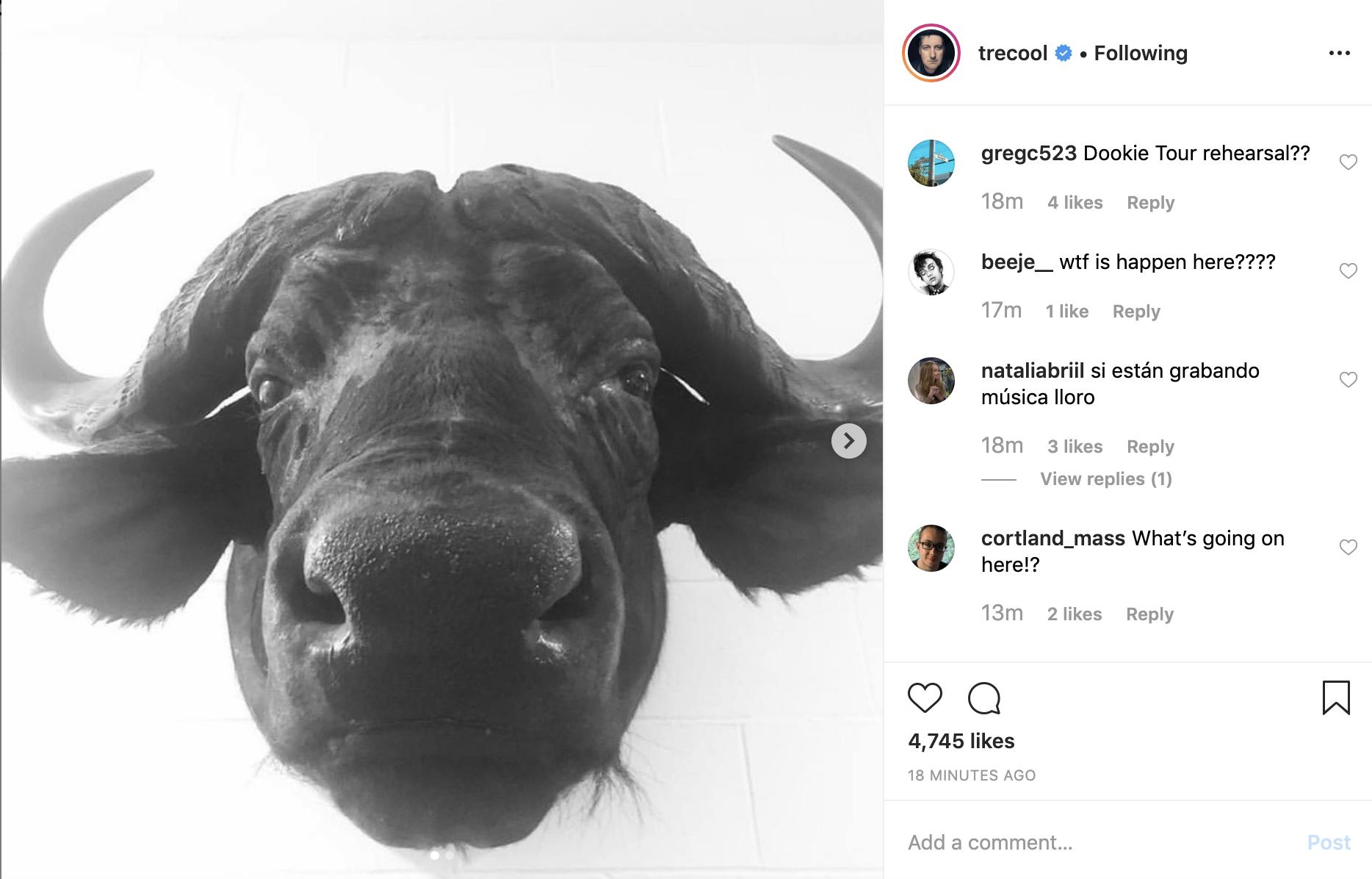 Imagen de un toro en el instagram de Trecool