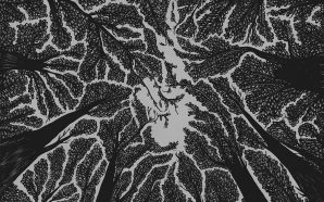 crown shyness review